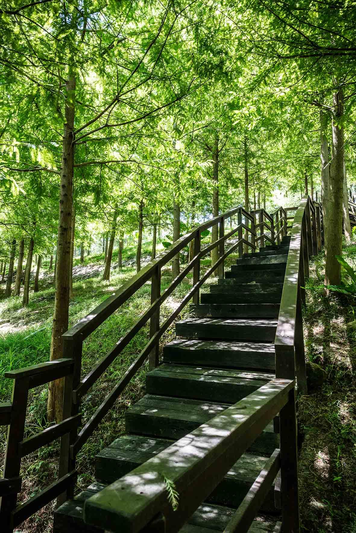 微光會館-樹林步道-落羽松